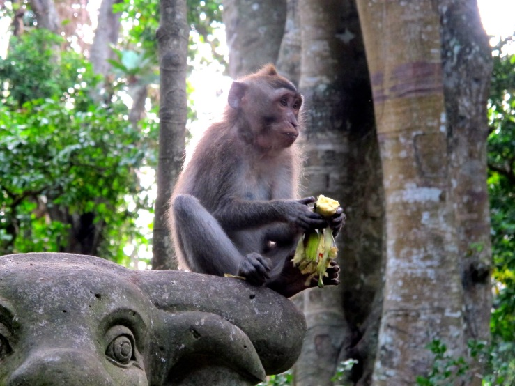 Monkey Forest 2